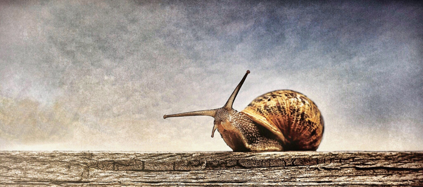 a brown snail crawling on a bark, this is an example of a slow marketing automation software